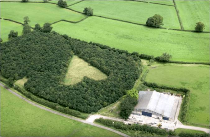 aerial view heart-shaped meadow tribute late wife