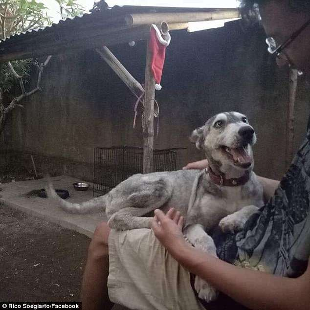 The Transformation Of A Malnourished Dog Who Was Rescued By An Animal Lover