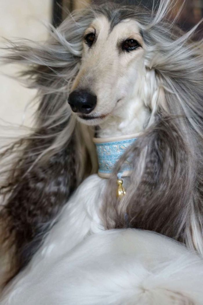 Man From Beijing Spends Thousands Of Dollars Trying To Keep His Dog's Hair Stylish Daily