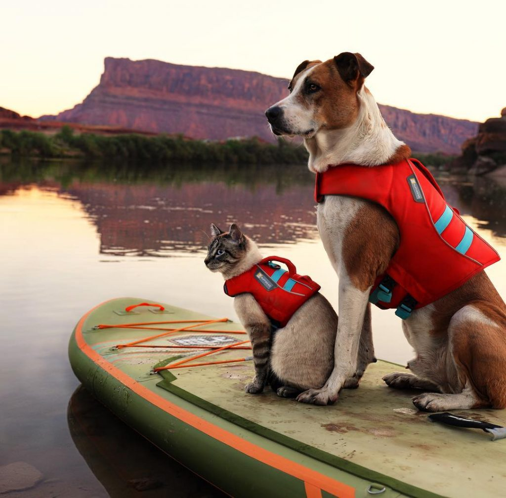 pet duos travel world strongest bonding