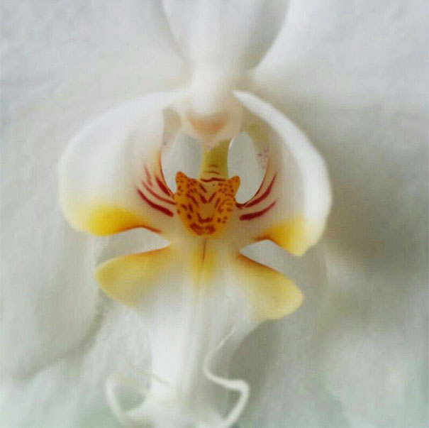 15+ Flowers That Resemble Something Else