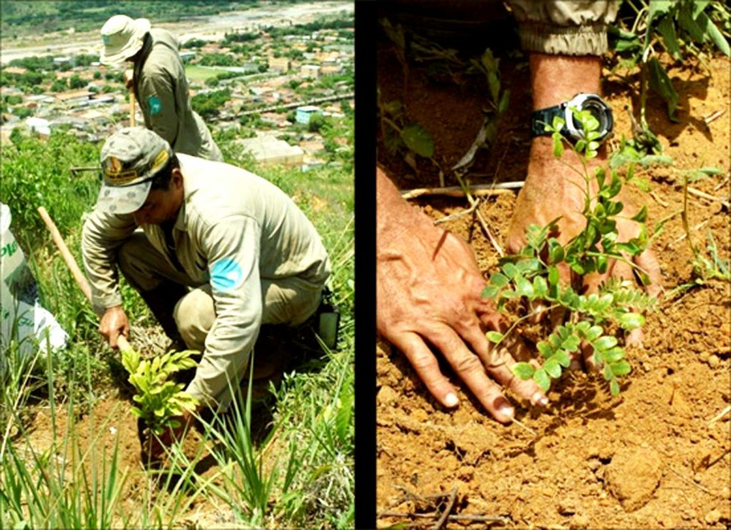 The Brazilian Photographer And The 20-Year Reforestation Project Of Over 2.7 Million Trees