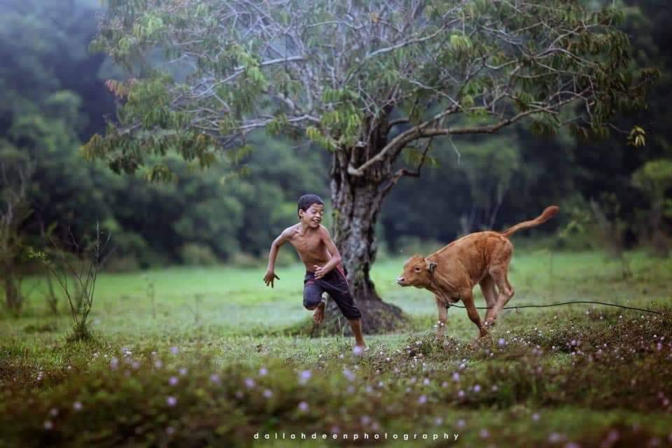 Terengganu Boy Playing With Cattle Have Gone Viral After Winning at an International Forum