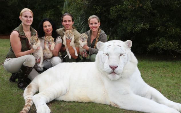 White Lion And White Tiger Have Babies Together And They Are The Cutest Babies Ever