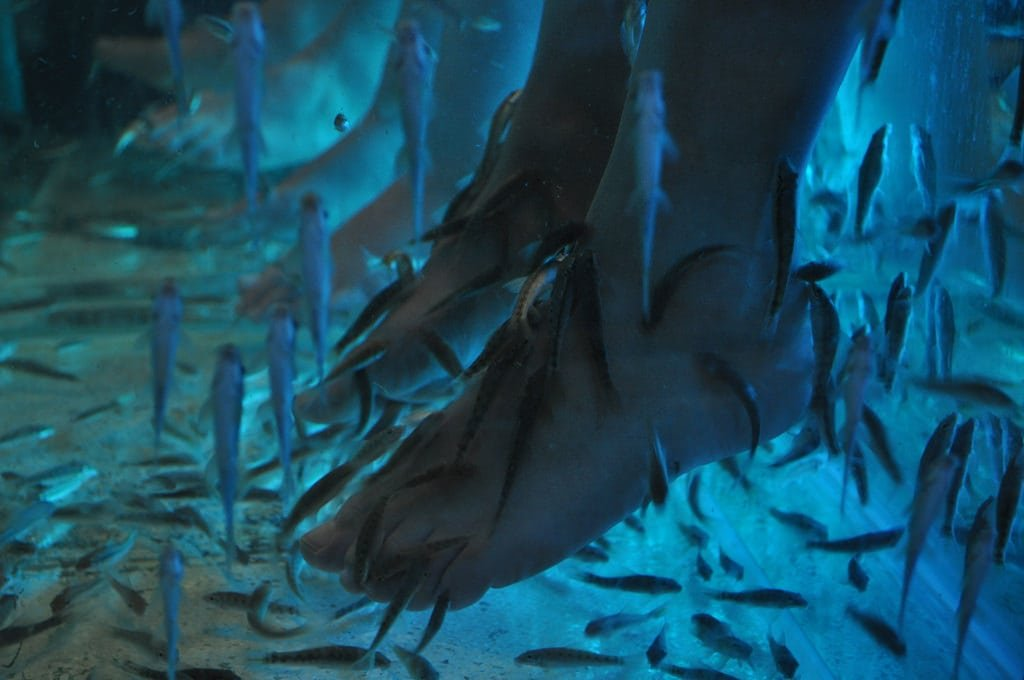 fish pedicure, toe