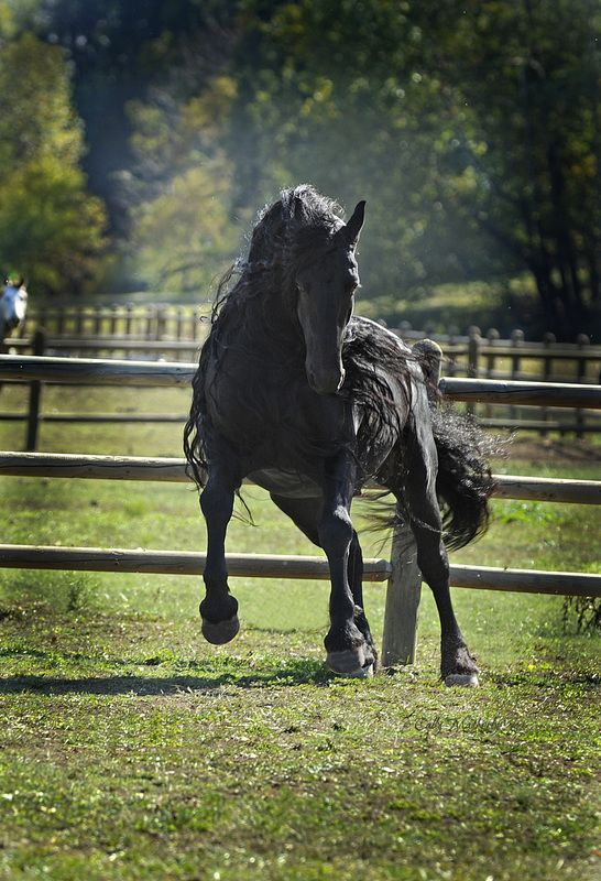 Meet The World's Most Handsome Horse: Frederik The Great