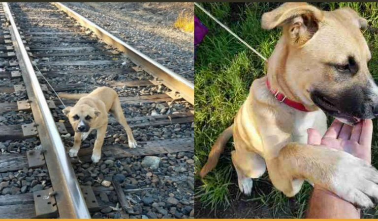 Man Finds A Puppy Tied To Railway Track, Rescues Him