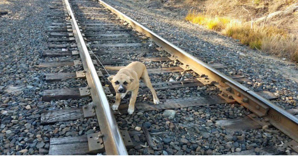 puppy, rescued, railway track