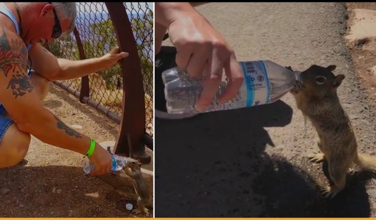 Squirrel Quenches Thirst By Drinking Total Water From Tourist's Bottle