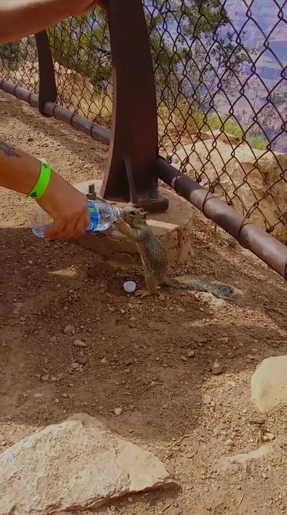 squirrel quenches thirst tourist
