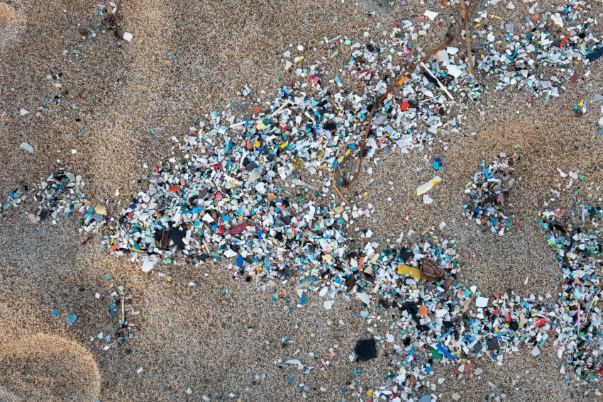 Microplastic found in marine animals of ocean trenches