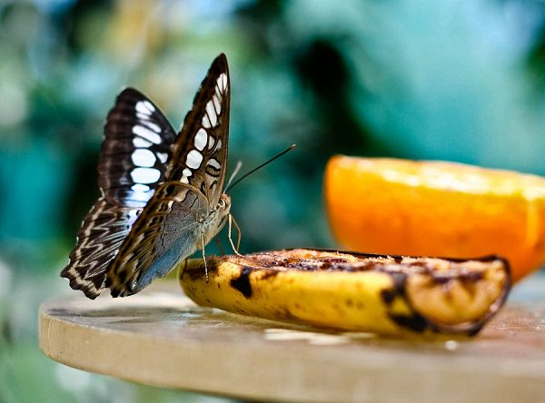 Amazing Uses Of Banana Peel That Would Want You To Throw Them From Next Time