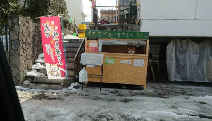 This 3 Year Old Dog Runs A Sweet Potato Shop In Japan