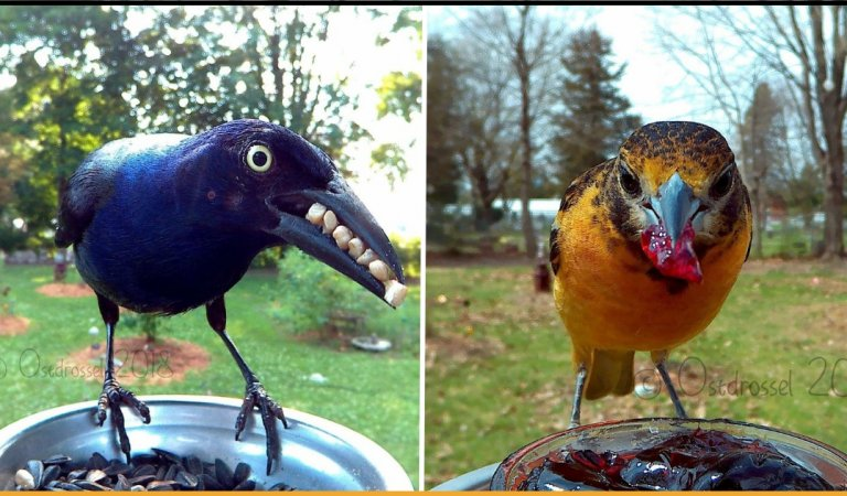 Photographer Set Up A Photo Booth For Birds, See The Amazing Results Here!