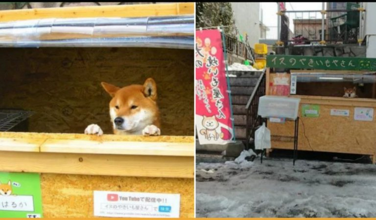 This 3-Year-Old Dog Runs A Sweet Potato Shop In Japan