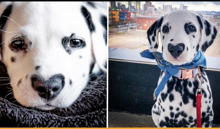 This Puppy Named Wiley Is Ruling Over The Internet For His Heart-Shaped Nose