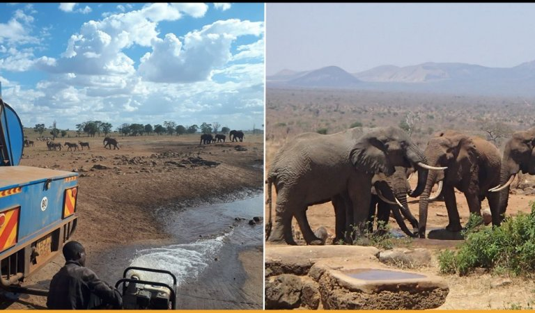 Man From Kenya Travels Daily To Bring Truckload Of Water For Thirsty Animals To Save Them From Dying