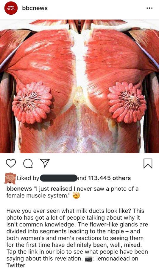 Female Mammary Glands