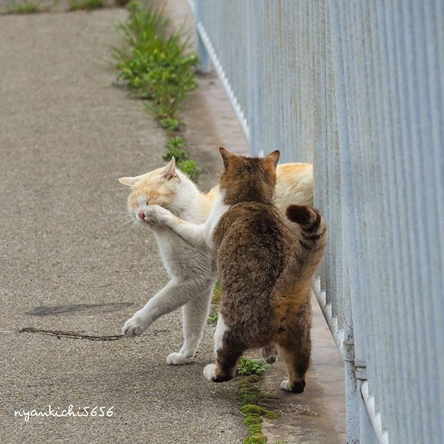 Japanese Photographer Photographs Stray Cats and They Look Absolutely Adorable