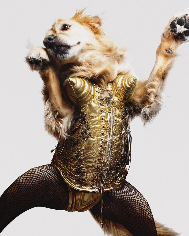 Dog Replicates Madonna Iconic Photos