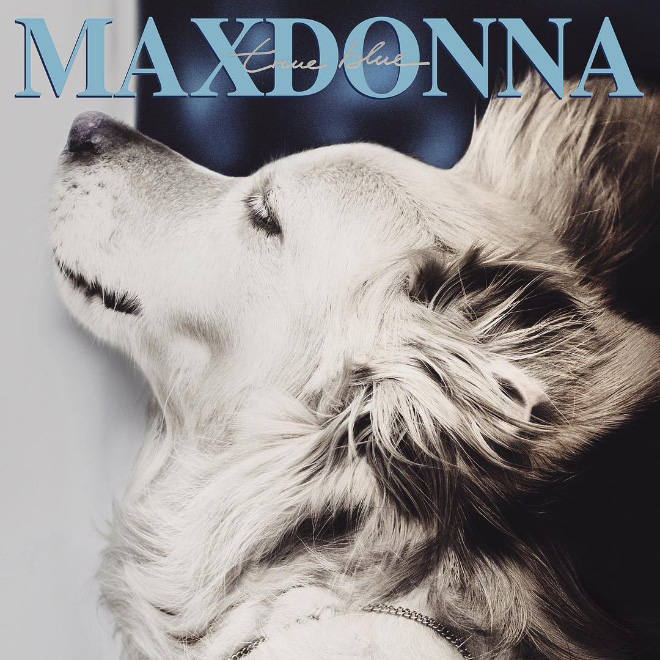 Dog Replicates Madonna Iconic Photos