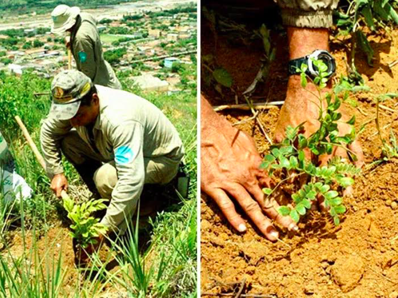 Brazilian Couple Planted Trees For 2 Decades And Restored The Destroyed Forest
