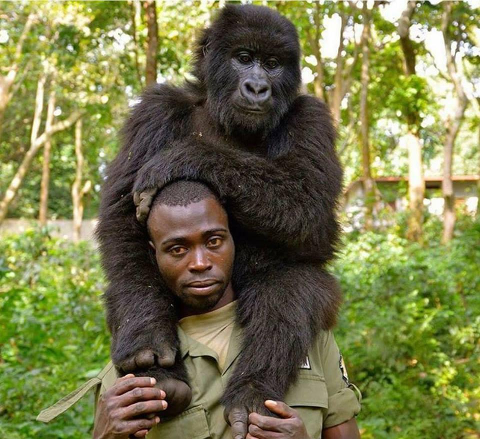 Anti-Poaching Rangers And Gorillas