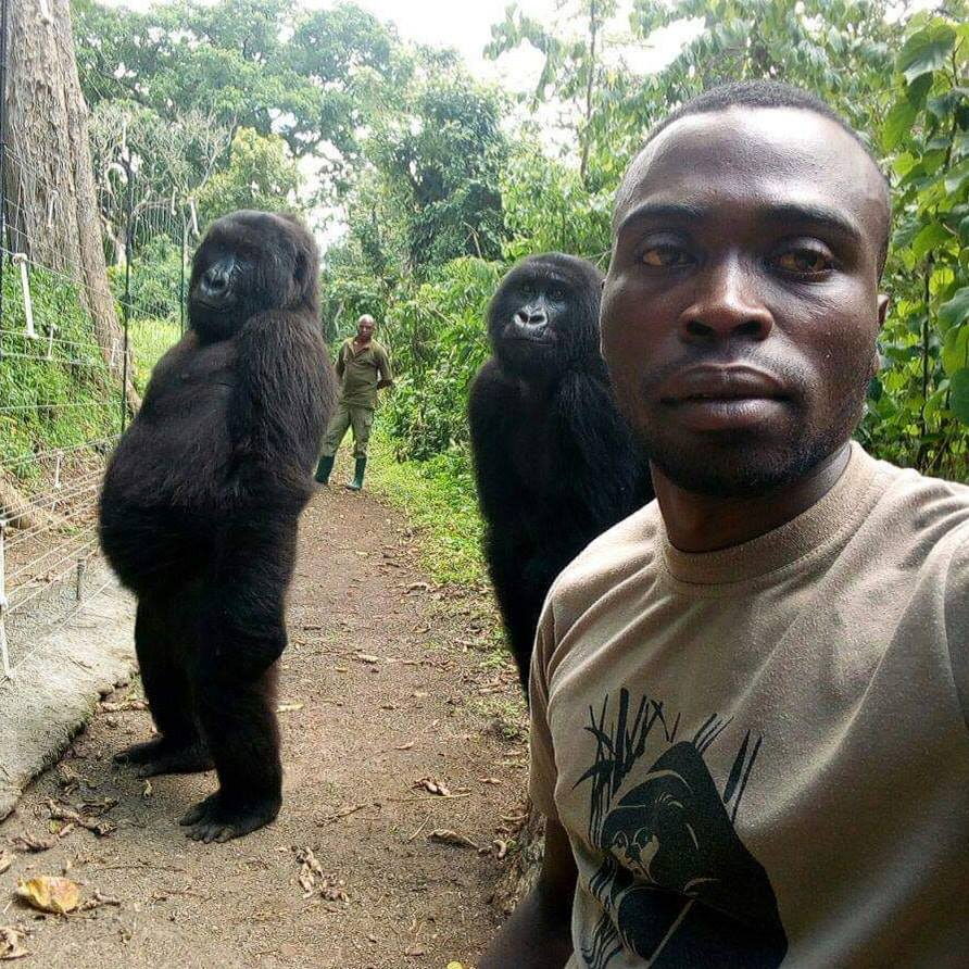 Anti Poaching Rangers And Gorillas