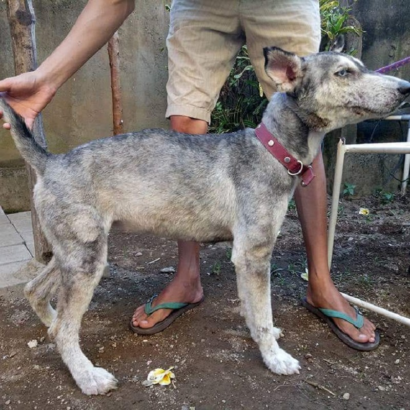 Boy From Bali Restores The Health Of A Skinny Dog In Just 10 Months