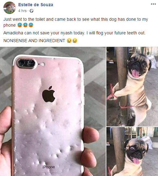 woman tied her pet dog to a pole because he chewd her iphone