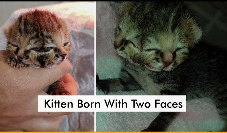 Adorable Kitten Born With Two Faces Surprised Everyone With Her Strong Will To Live