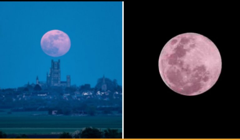 People On Twitter Have Shared The Mesmerizing Pictures Of Pink Full Moon