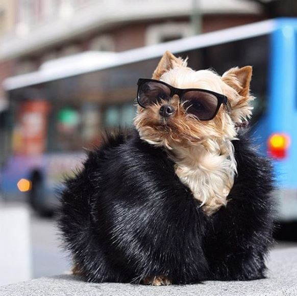 These Rich Dogs Of Instagram Are Living A More Lavish Life Than We Ever Will
