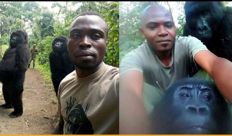Anti Poaching Rangers And Gorillas Pose Together For Selfie