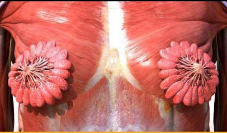 An Image Of What The Human Female Mammary Glands Looks Like, Goes Viral