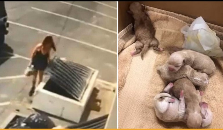 Woman Arrested After Dumping 7 Newborn Puppies In A Dumpster At Coachella
