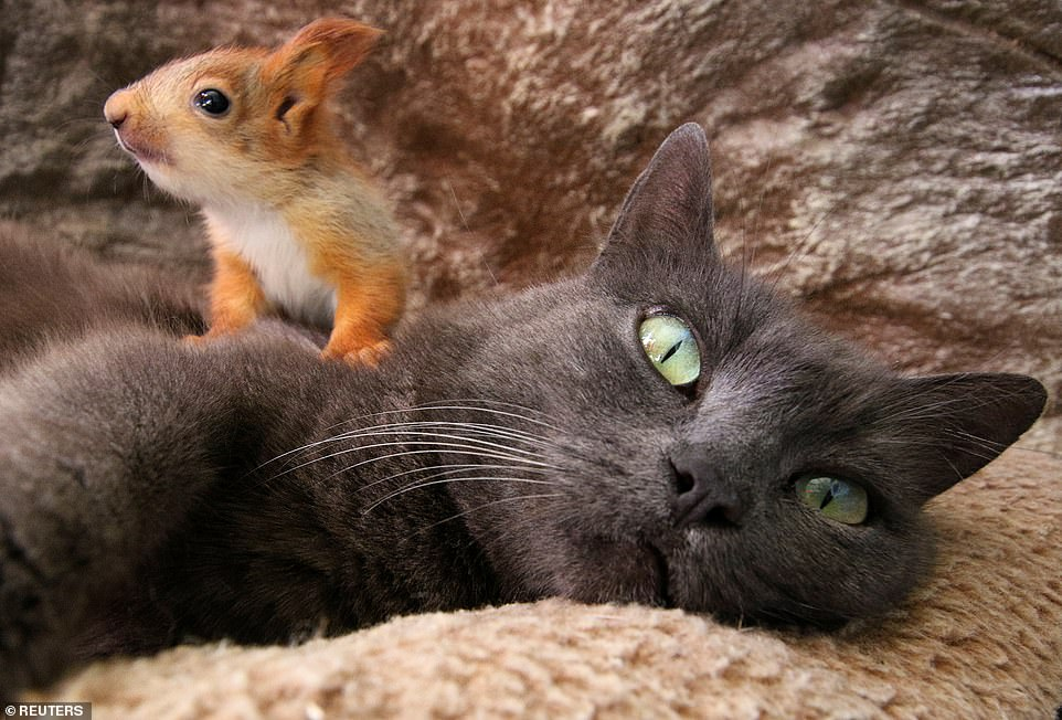 cat adopts four little squirrels