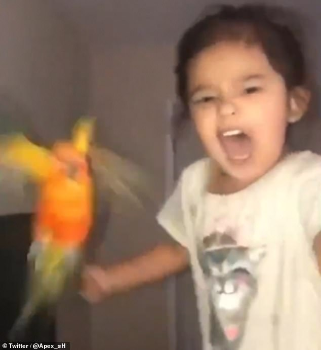 Reviewed: This Pet Bird Is Trained By The Little Girl To Attack Whoever She Screams At