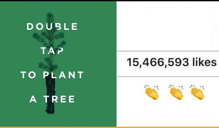 Picture Of A Tree Has Become The Fourth Most-Liked Post On Instagram For A Good Cause