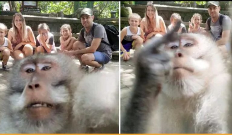 A Monkey Photobombs Family Pictures And Got Snapped Giving Them A Middle Finger