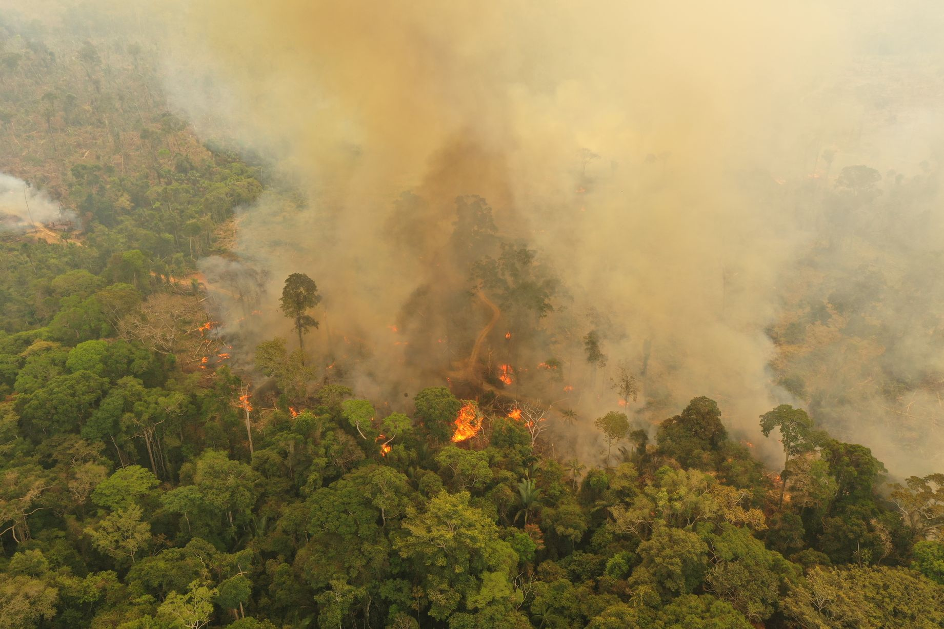 Leonardo DiCaprio's Earth Alliance Pledged To Donate $5 Million For Amazon Rainforest