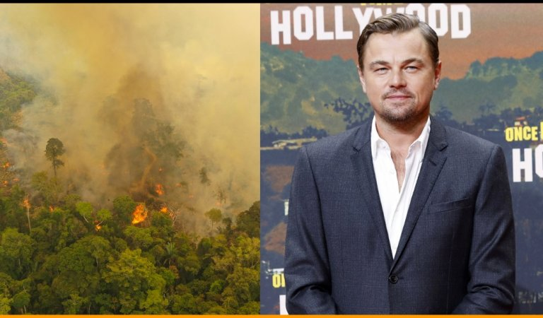 Leonardo DiCaprio's Earth Alliance Pledged To Donate $5 Million For Amazon Rainforest