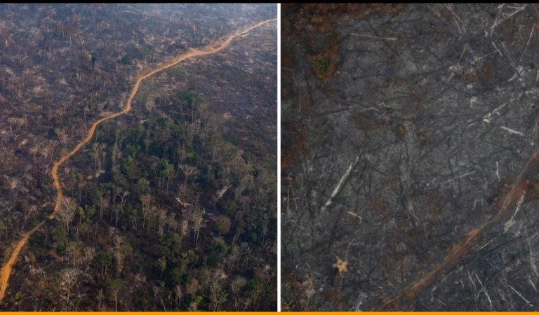 Aerial Pictures Of Amazon Rainforest Showing The Massive Destruction Done By The Wildfires