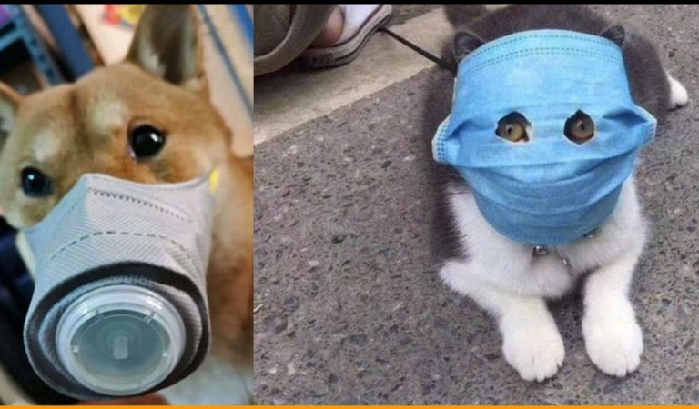 See the Pictures of Pets Wearing Masks In China Due To Coronavirus Terror