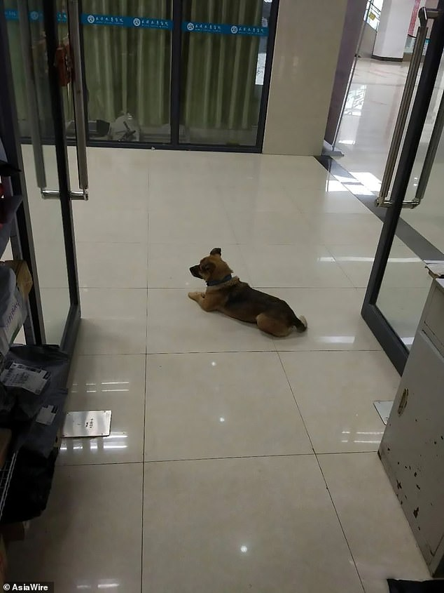 Dog Waits At Hospital For 3 Months After His Owner Died Of Coronavirus