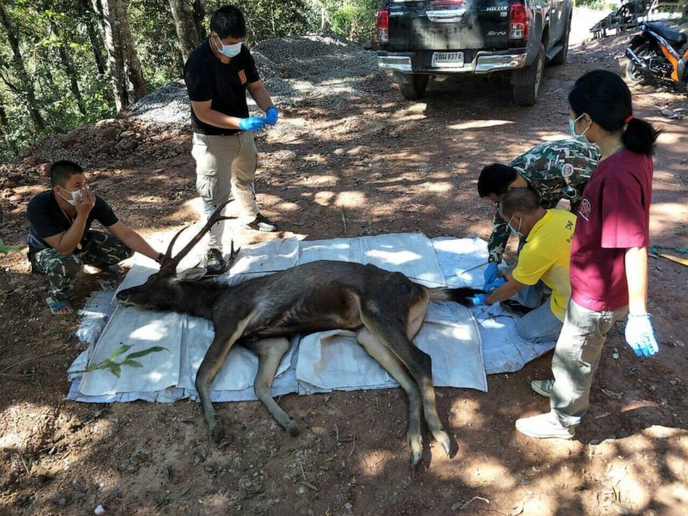 Deer Found Dead In Thai National Park With 15 Pounds of Trash Inside His Stomach
