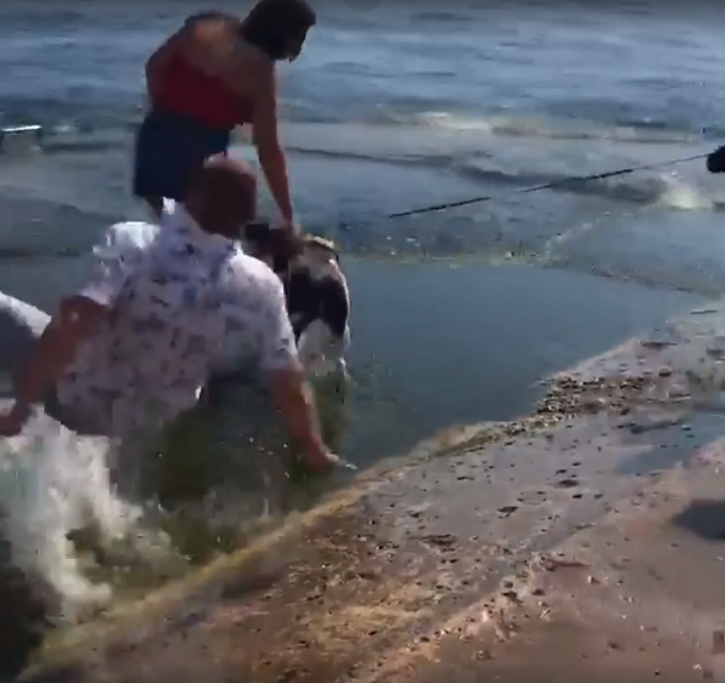 Falling In Love: Man Slips and Falls On The Beach Right Before Proposing His Girlfriend